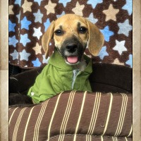 Adopt A Pet :: Nana - Greensboro, GA