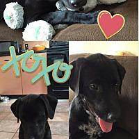 Adopt A Pet :: Cole - Marlton, NJ