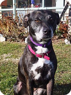 Terrier (Unknown Type, Medium) Mix Dog for adoption in New Milford, Connecticut - Solo Good with Cats!