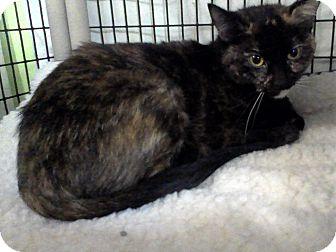 Domestic Mediumhair Cat for adoption in Muskegon, Michigan - jenna