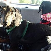 Adopt A Pet :: Rascal - MD - Jacobus, PA