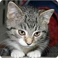 Adopt A Pet :: Palmer - Montgomery, IL