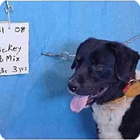Adopt A Pet :: Mickey/Rescued! - Zanesville, OH