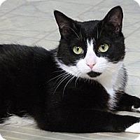 Adopt A Pet :: Penguin - Bedford, MA