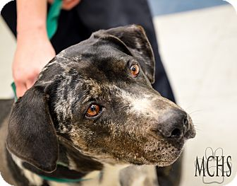 Catahoula Leopard Dog Mix Dog for adoption in Martinsville, Indiana - Monroe