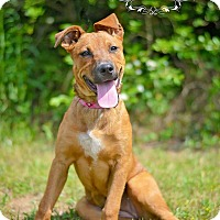 Adopt A Pet :: CheChe - Fort Valley, GA
