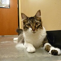Adopt A Pet :: Monroe - Capshaw, AL