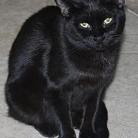 Adopt A Pet :: Yara - Hamilton, ON