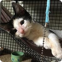Adopt A Pet :: Apollo - East Brunswick, NJ