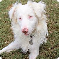 Adopt A Pet :: Zonder - Hagerstown, MD