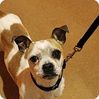 Adopt A Pet :: Wix - Chicago, IL