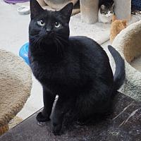 Adopt A Pet :: Cinder - Quail Valley, CA