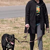 Adopt A Pet :: Popeye - Midlothian, VA