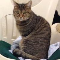 Adopt A Pet :: Darrell - Westville, IN