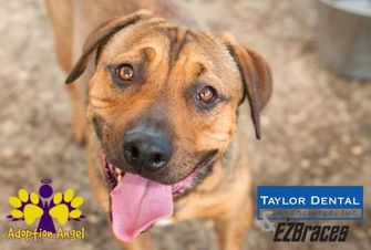Mixed Breed (Large) Mix Dog for adoption in Georgetown, Texas - Goose
