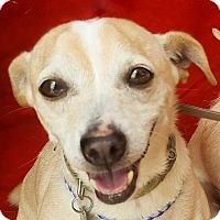 Adopt A Pet :: Marty - Corona, CA