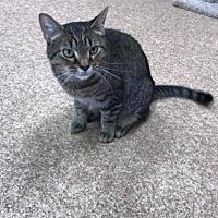 Adopt A Pet :: Chessie - Beckley, WV
