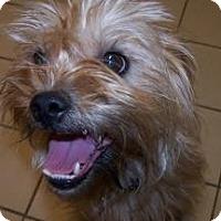 Adopt A Pet :: Max - Jackson, MI