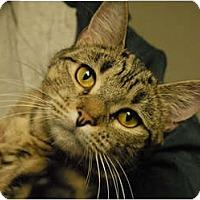 Adopt A Pet :: Maggie - Lunenburg, MA