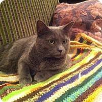 Adopt A Pet :: Tatti (LE) - Little Falls, NJ
