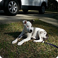 Adopt A Pet :: Hope - Spring City, TN