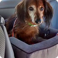 Adopt A Pet :: Gromit - Jupiter, FL