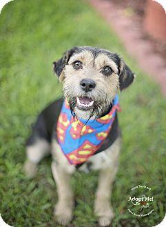 Dachshund Mix Dog for adoption in Kingwood, Texas - Will
