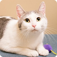 Adopt A Pet :: Skittles - Chicago, IL