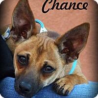 Adopt A Pet :: CHANCE - Riverside, CA