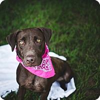 Adopt A Pet :: Payton - Fort Valley, GA