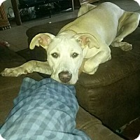 Adopt A Pet :: Zora - Oviedo, FL