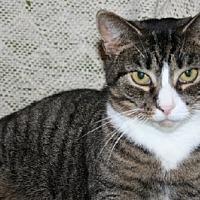 Adopt A Pet :: Jehosheba - Jenkintown, PA