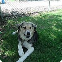 Adopt A Pet :: Wynter - Gadsden, AL