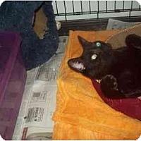 Adopt A Pet :: SASA-DOO - Little Neck, NY