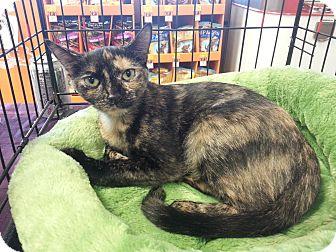 Calico Cat for adoption in Smyrna, Georgia - Summer
