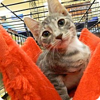 Adopt A Pet :: Cassidy - The Colony, TX