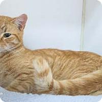 Adopt A Pet :: Black Hawk - Merrifield, VA
