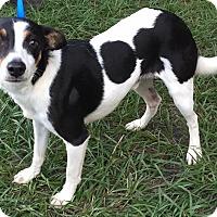 Adopt A Pet :: Fabian - Orlando, FL