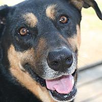 Adopt A Pet :: Belle - Seguin, TX
