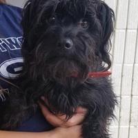 Adopt A Pet :: Ebbie - Tulsa, OK