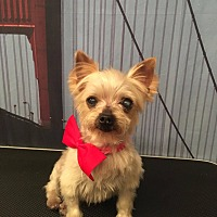 Adopt A Pet :: Snickers - Fountain Valley, CA