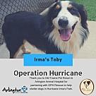 Adopt A Pet :: Irma's Toby