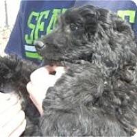 Adopt A Pet :: Brisbane ADOPTED!! - Antioch, IL