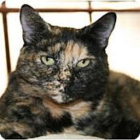 Adopt A Pet :: Tootsie - Naples, FL