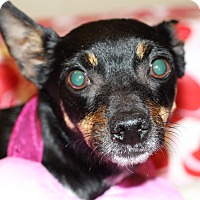 Adopt A Pet :: Willow - Kempner, TX