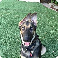 Adopt A Pet :: Jack..I am a DOLL! - Redondo Beach, CA