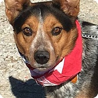 Adopt A Pet :: Echo - Texico, IL
