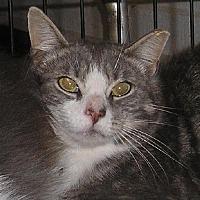Adopt A Pet :: Stewart (Feral) - Lovingston, VA