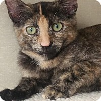 Adopt A Pet :: Melisandre - Walnut Creek, CA