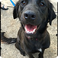 Adopt A Pet :: Salma - Austin, TX